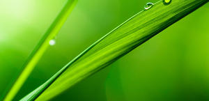 Abstract grass wallpaper