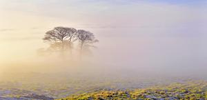 Morning Fog HD Wallpaper for PC and Mac