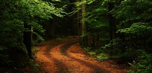 A beautiful road in a rain forest HD Wallpaper
