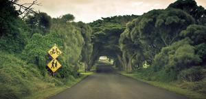 Nature Overgrown Trees Road HD Wallpaper