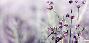 purple flowers wallpaper