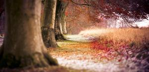 The Ranch Trees Fall HD Wallpaper for Mac and PC
