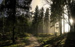 Forest trail wallpaper