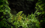 macro moss hd wallpaper
