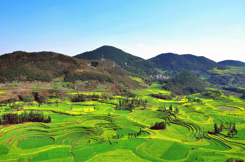 Canola Fields Quotes: Beautiful Canola Fields Of Luoping, China [11 Pics]