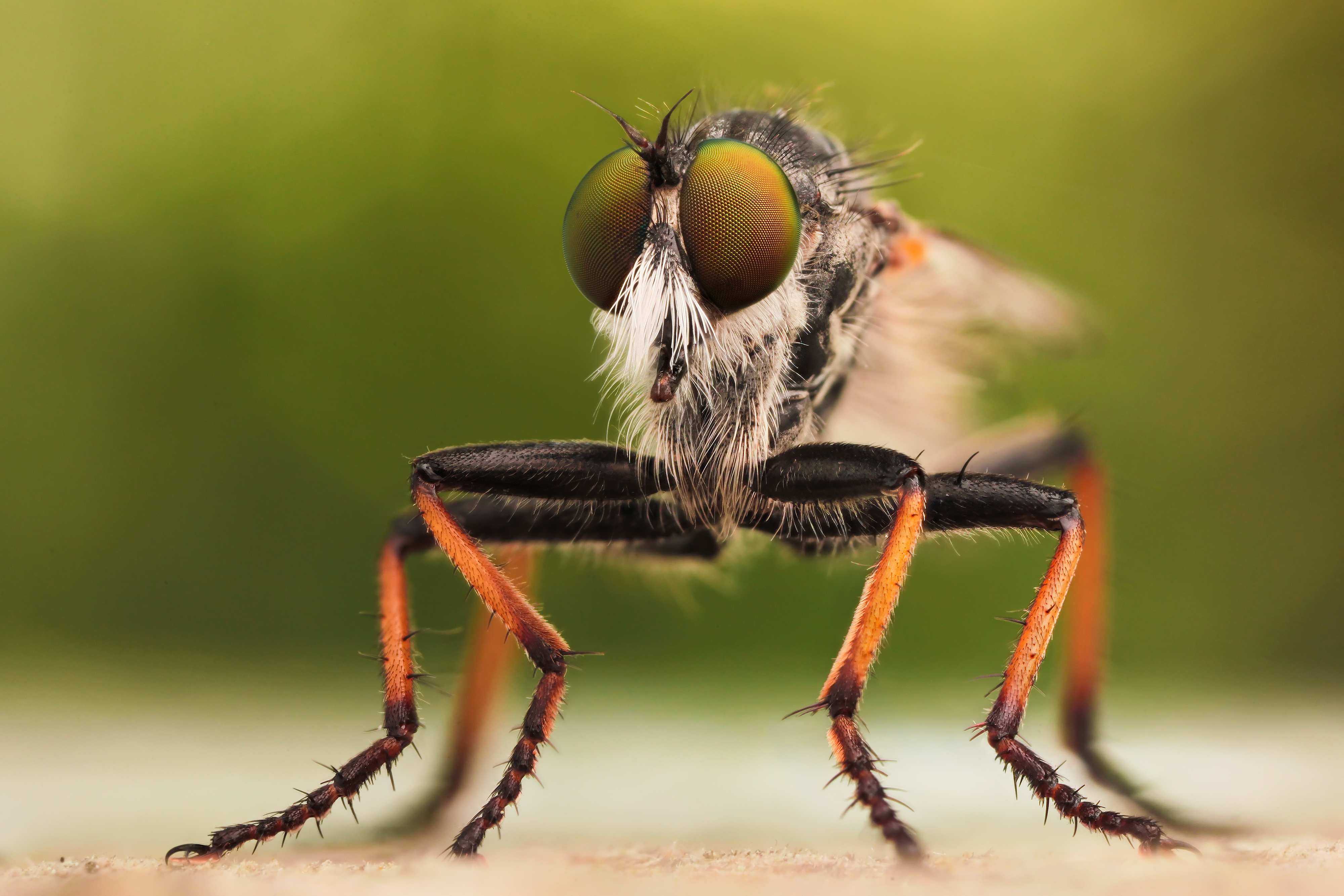 Incredible High Quality Macro Photography of Insects [20 ...