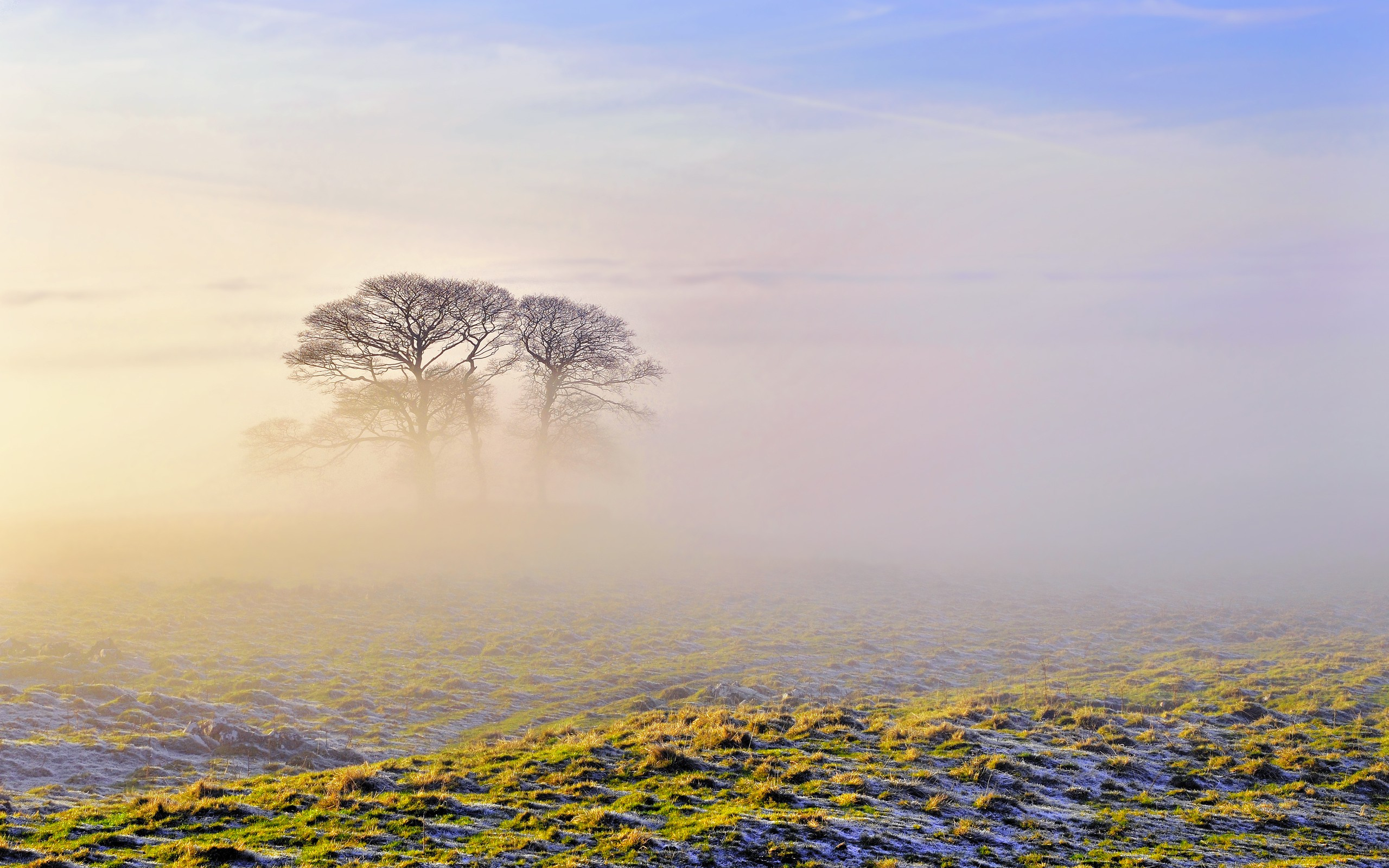 Daily Wallpaper: Frosty Morning