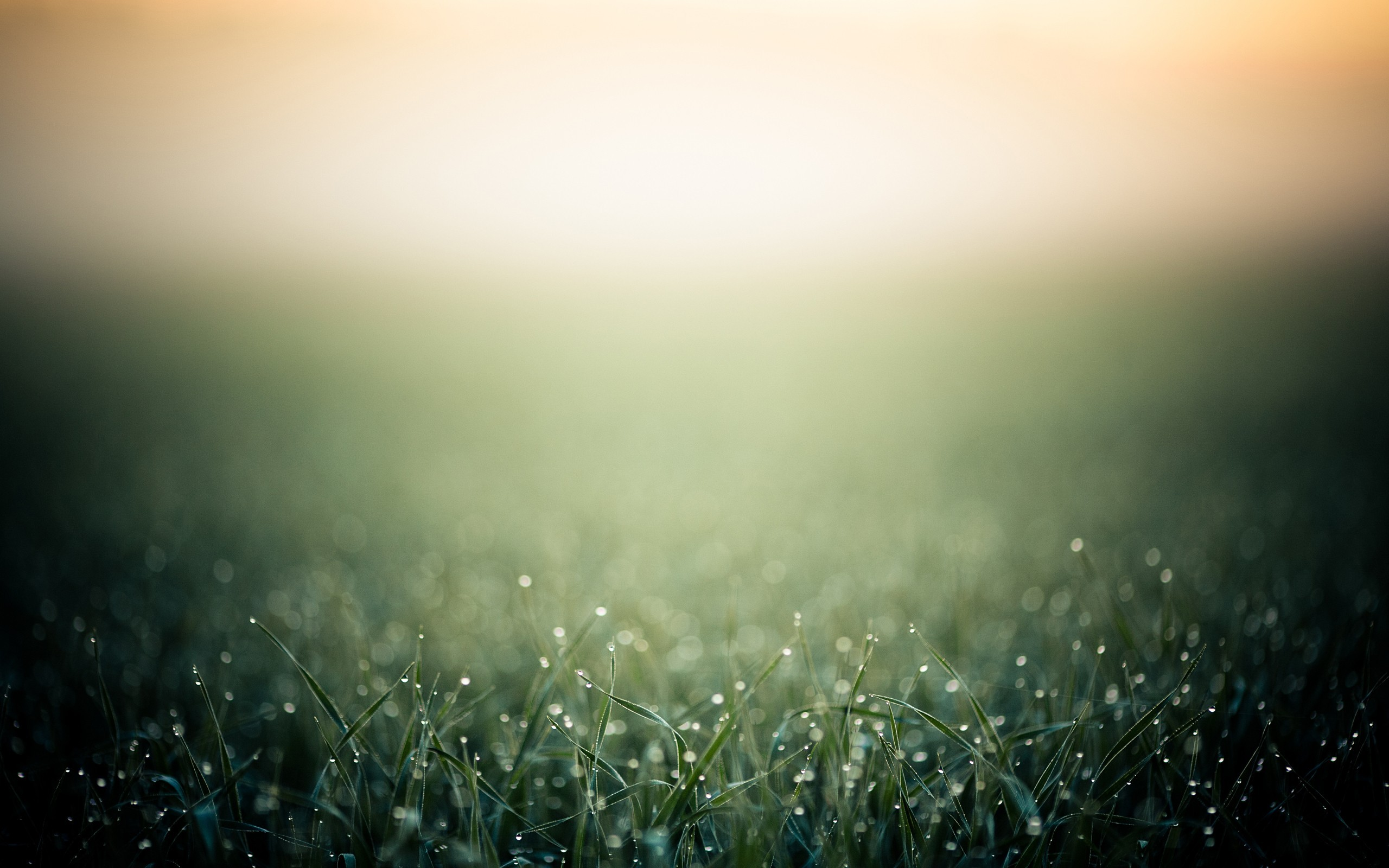 daily wallpaper: morning grass | i like to waste my time