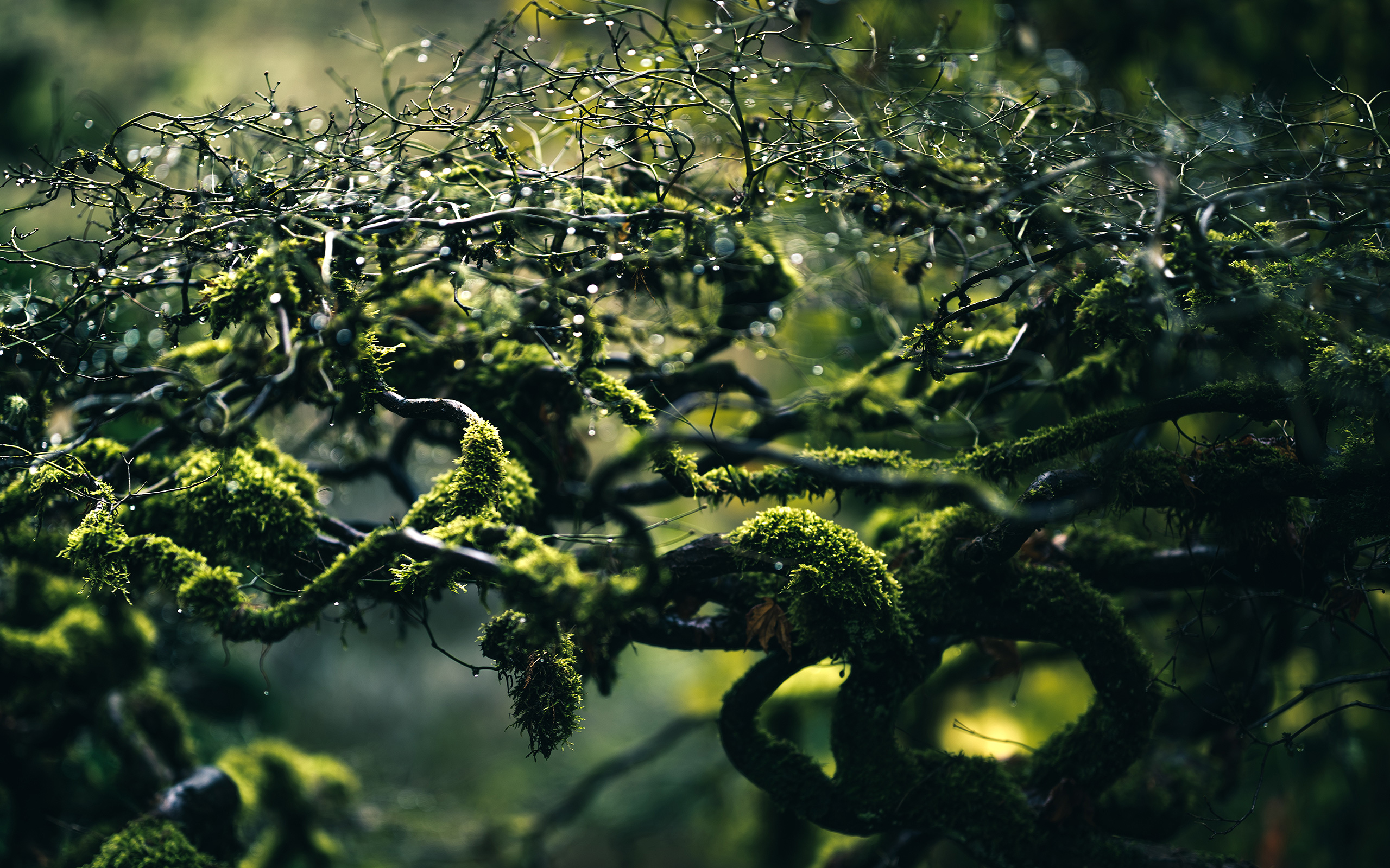 daily wallpaper: morning dew [exclusive] | i like to waste my time
