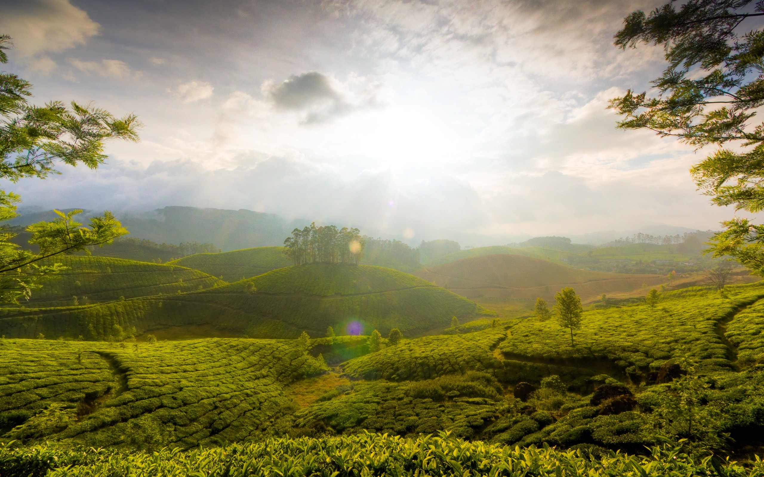 Daily Wallpaper Hills Of Munnar India I Like To Waste