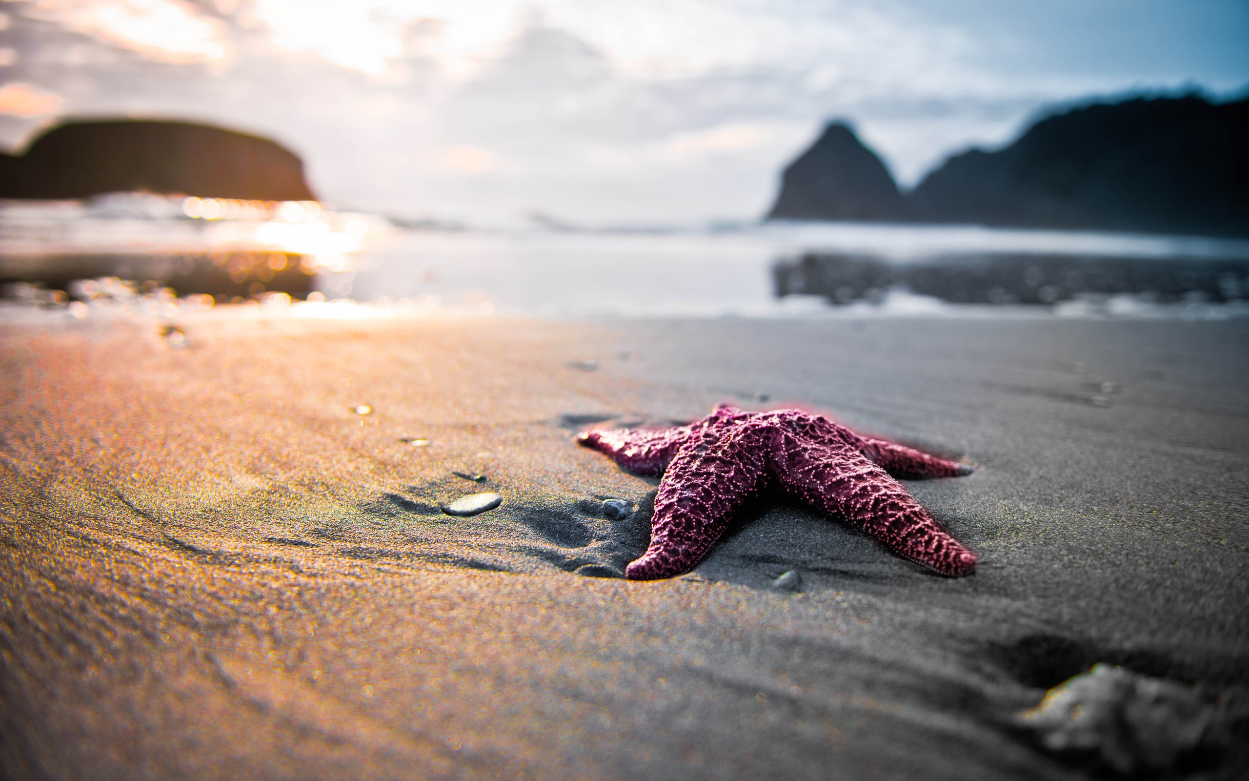 Daily Wallpaper Starfish