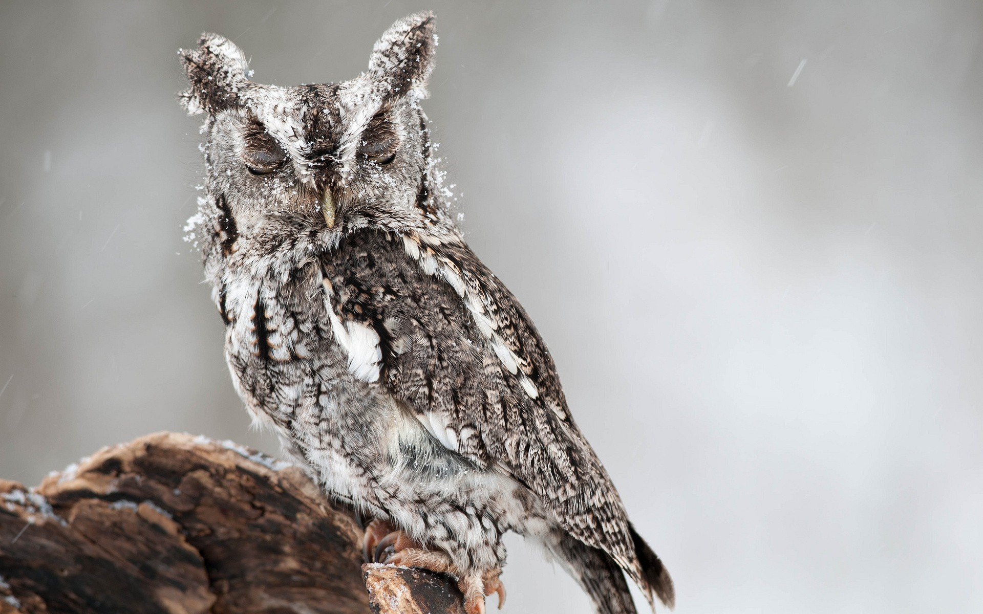 daily wallpaper: winter owl | i like to waste my time