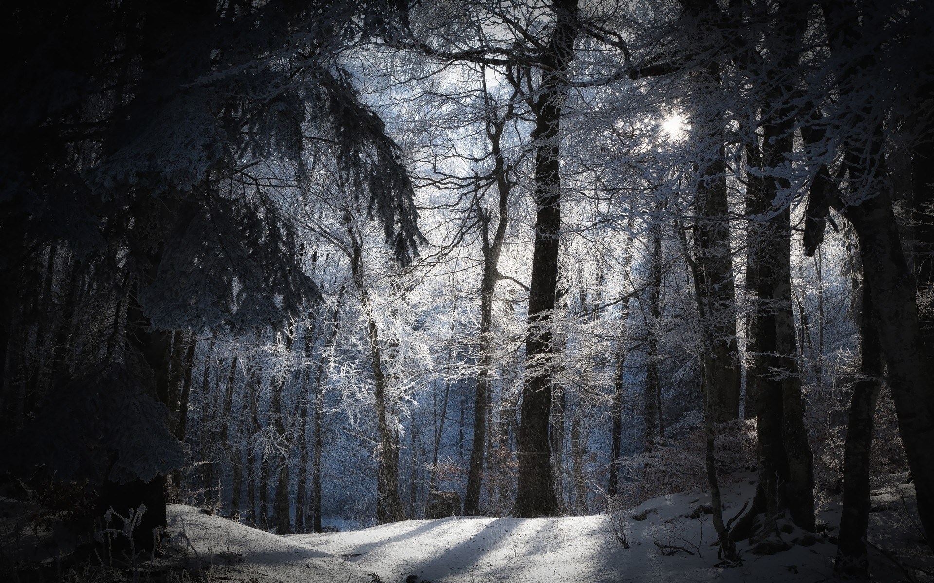 daily wallpaper winter forest i like to waste my time